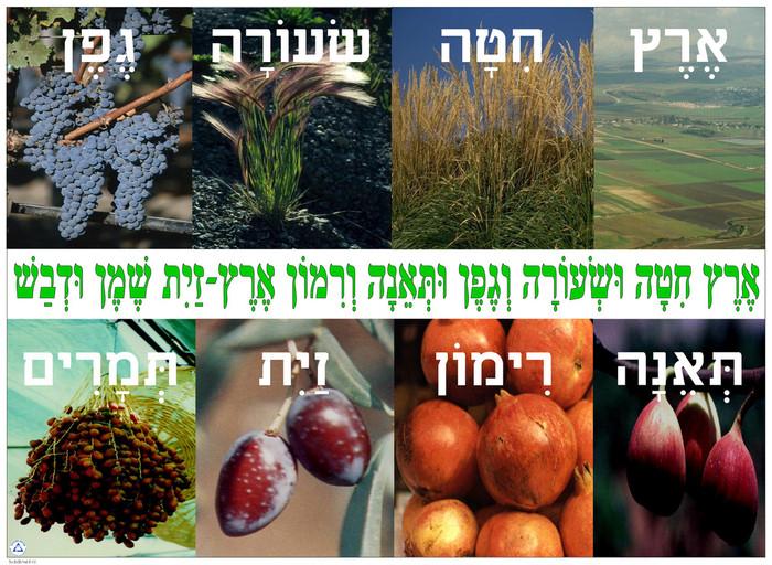 Shivat Haminim/Eretz Chita Poster