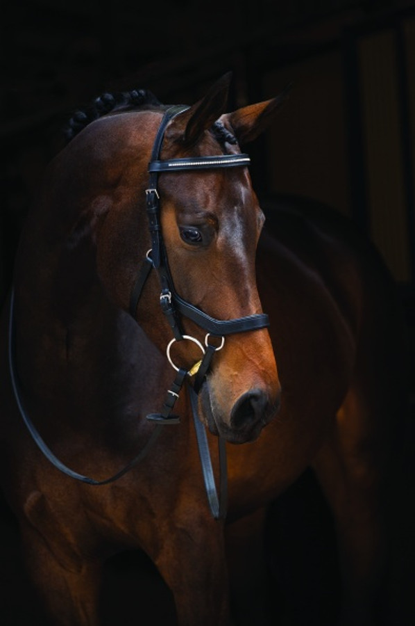 Micklem Diamante Competition Bridle