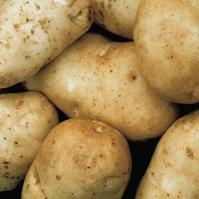 "Potato, Kennebec Seed, 1 Lb 1-1/2"" - 2-1/8"" Size"