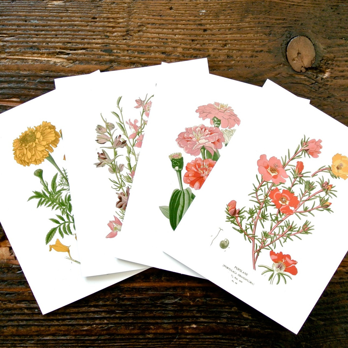 Botanical greeting cards set of 4 seattle seed company botanical greeting cards set of 4 m4hsunfo Gallery
