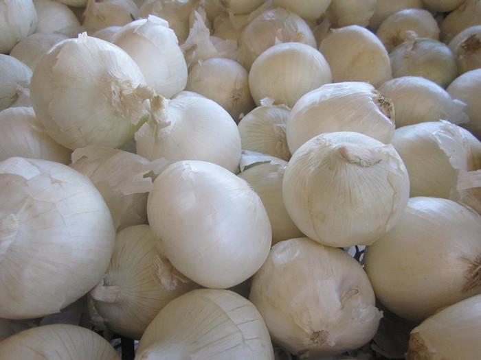 Onion - Gladstone OG
