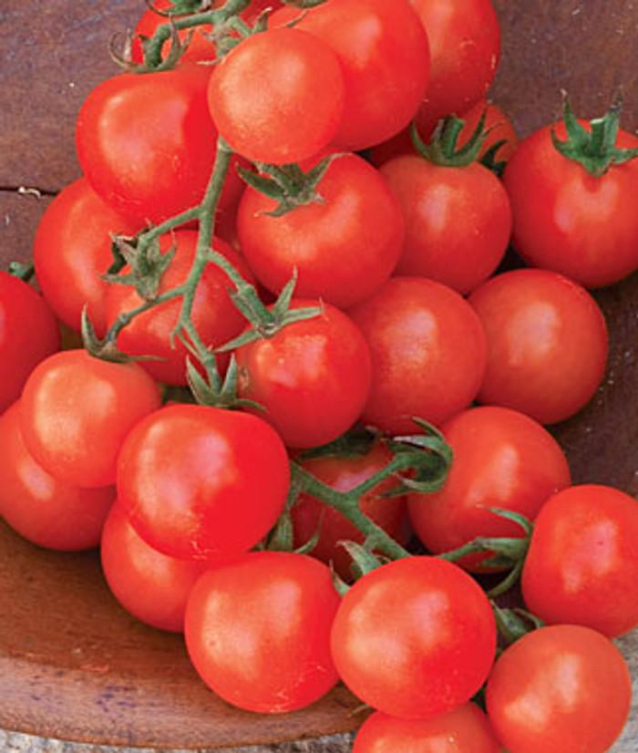 Tomato - Sweetie OG