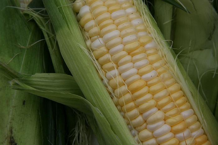Corn - Luscious F1 OG
