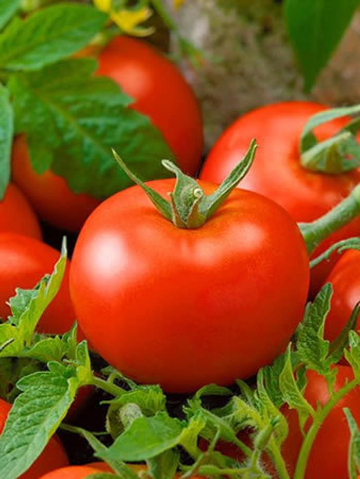 Tomato -Thessaloniki OG