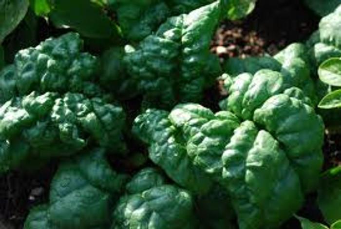 Spinach - Tyee OG