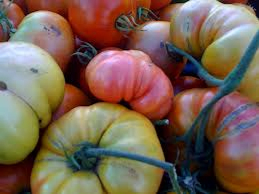 Tomato - Hillbilly OG