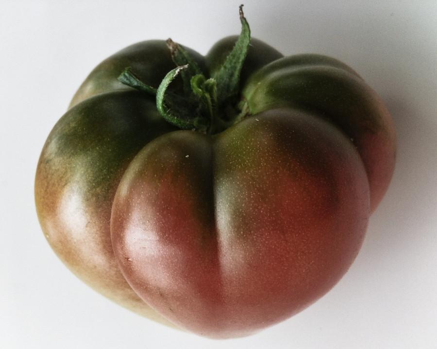 Organic Black Krim tomato from the Seattle Seed test garden.