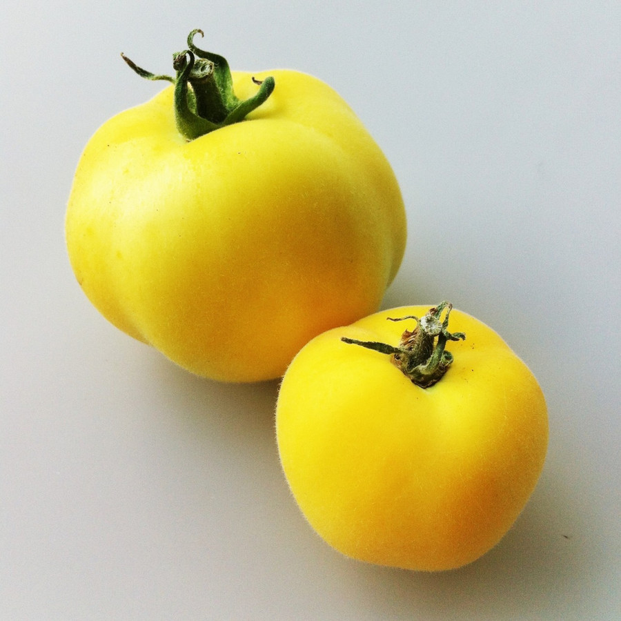 Organic Garden Peach tomatoes from the Seattle Seed test gardens.