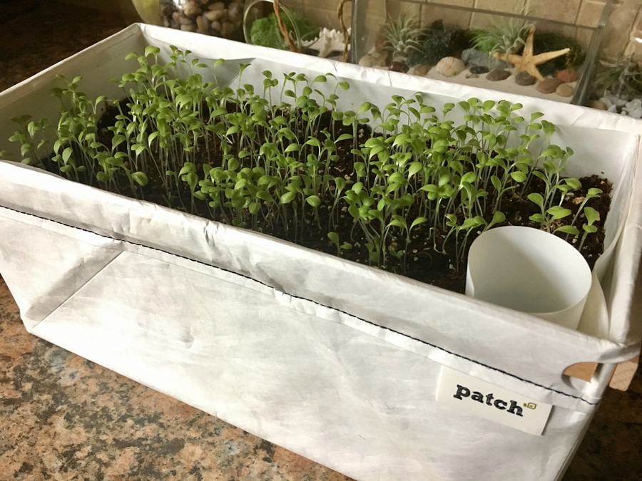 Quick-growing microgreens