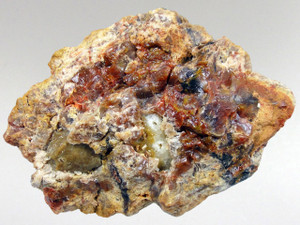Coprolite (Dinosaur Poo) 6