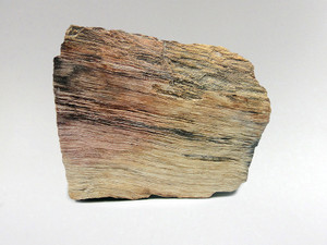 Fossil Wood - Decorative 5