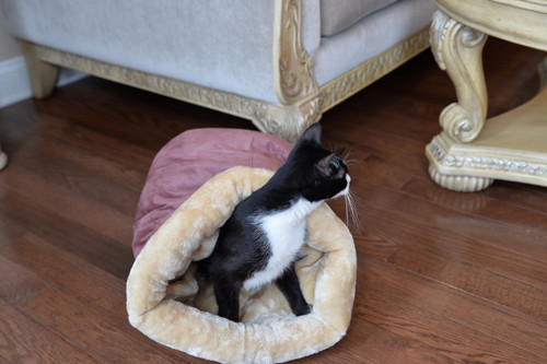 Armarkat Cat Bed C15HTH/MH