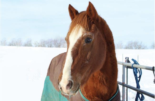 Senior Horse Nutrition