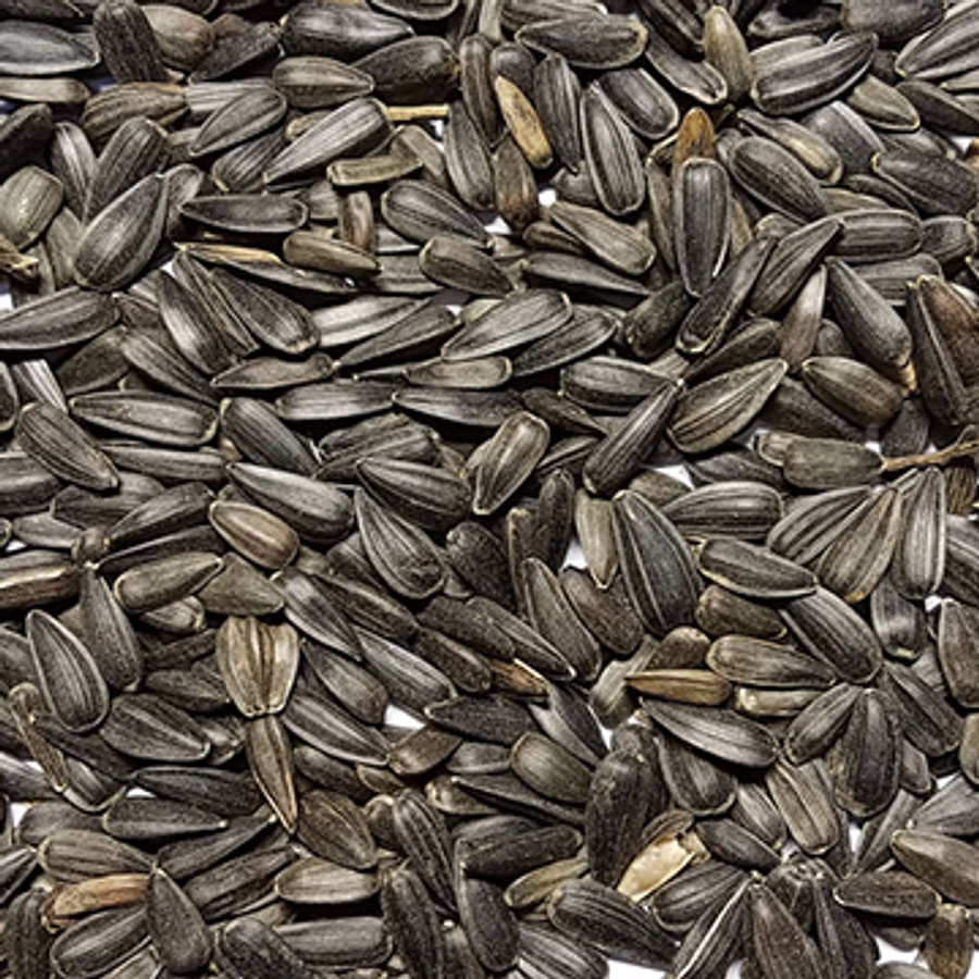 Black Oil Sunflower Seeds