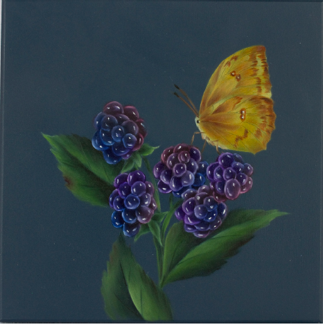 Butterfly and Blackberries - E-Packet - Debra Welty