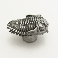 Phacopid Trilobite Drawer-Pull