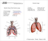 Human Lungs Keychain packaging