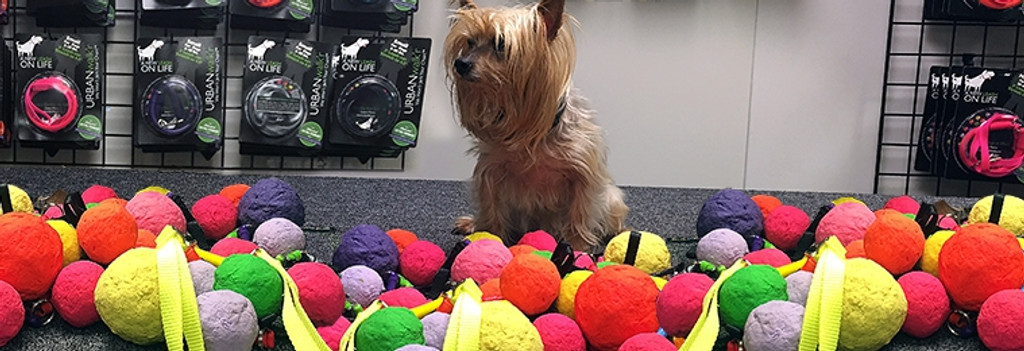 Dog Toys & Accessories