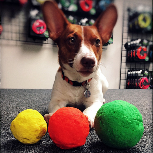 WUNDERBALL - Best Fetch Toy