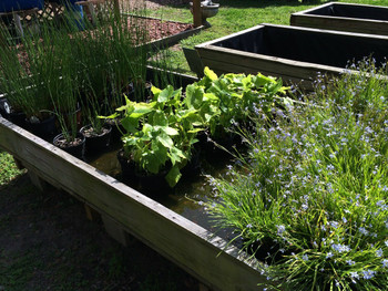 A variety of aquatic pond plants from The Pond Hub