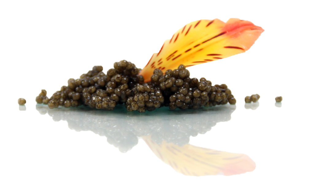 Caviar Deals to Gobble Up This Thanksgiving