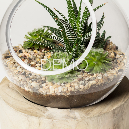 Electronic Orbit Terrarium - Large