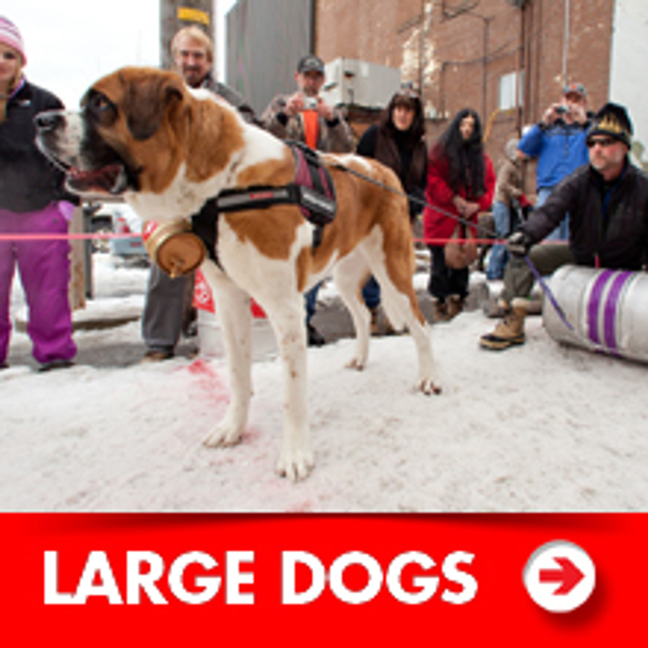 Large Dog Accessories