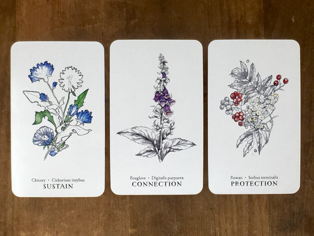 Hedgewitch Botanical Oracle cards