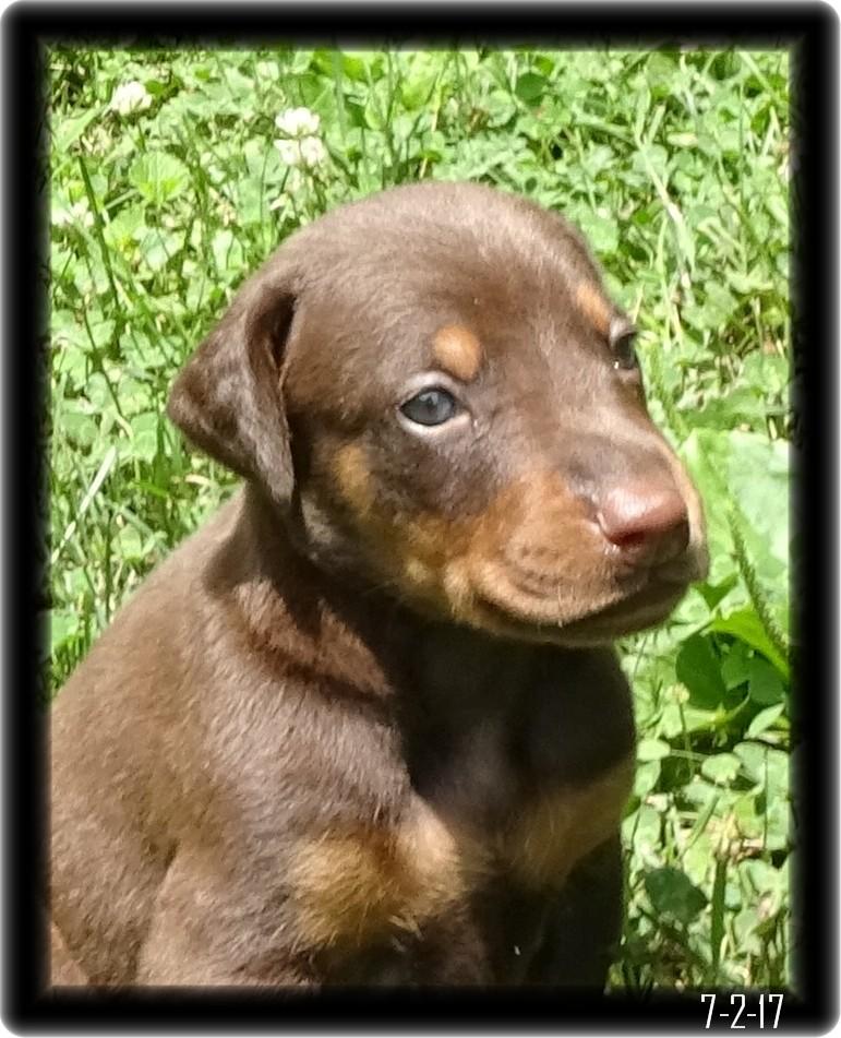 Dobe Pup
