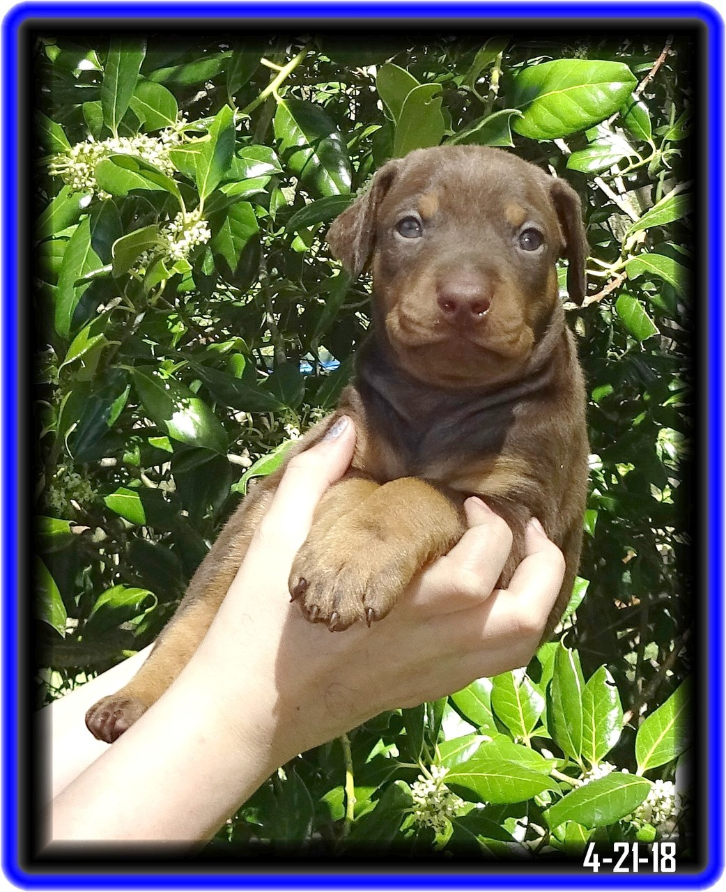Ruby / Reserved