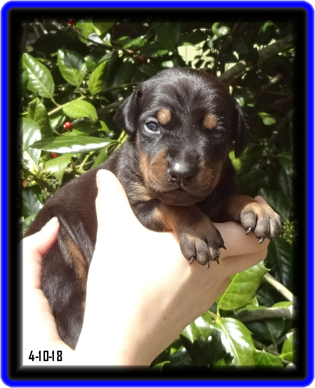 Lucy / Reserved