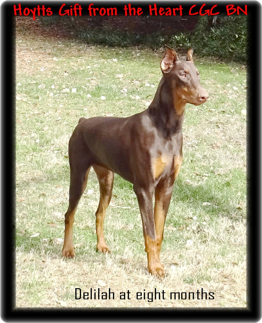 Hoytt's Lady Astor...Cosala Jocotepec Jalisco, Mexico.  In GV training /Reserved