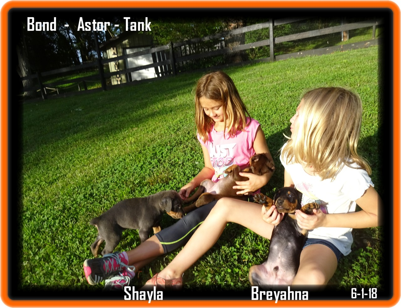 Bond - Astor - Tank  out for time with the girls Shayla & Breyahna  in the park ( our front yard) .