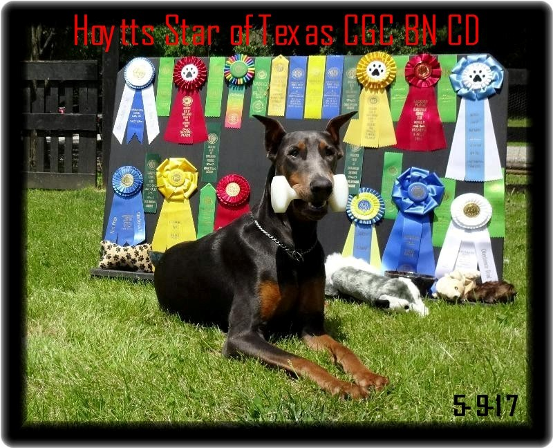 Star - Hoytt's Texas Star CGC BN CD GN - babies  due late June