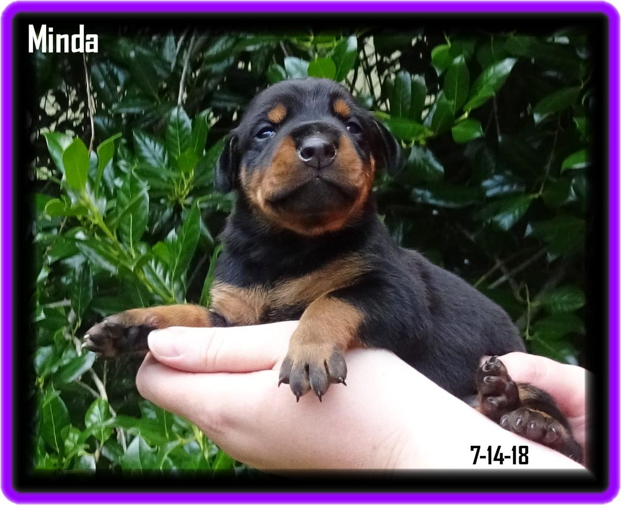 Minda - Star baby / Reserved  - Charleston SC ... started GV program