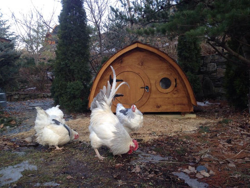 Our coops add class to any chicken yard!