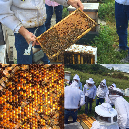 Spring Beekeeping Endeavors - Wednesday, March 28, 2018 - Sold Out