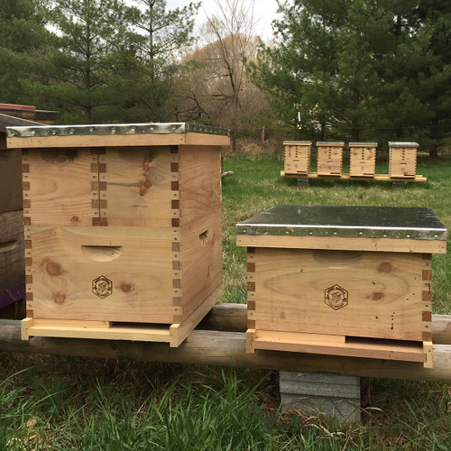 Making Overwintered Nucs - July 7, 2018 - Sold Out