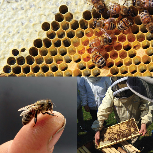 Beekeeping Fundamentals - Saturday, January 6, 2018 - Sold Out