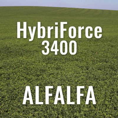 Alfalfa - HybriForce 3400