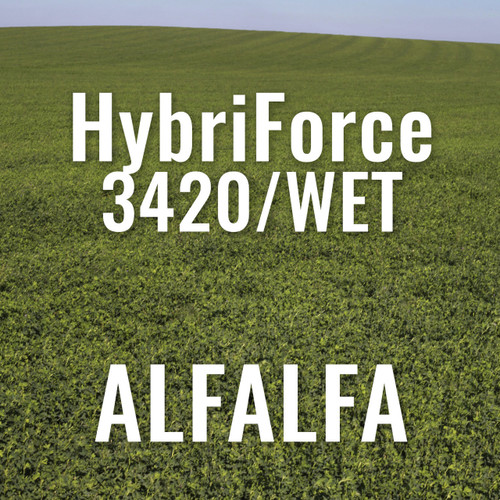 Alfalfa - HybriForce 3420-WET