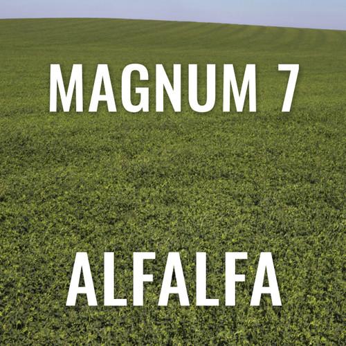 Alfalfa - Magnum 7