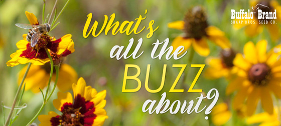 Attract Pollinators with Local Wildflowers