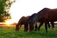 Magnesium Deficiency in Horses: 3 Common Challenges