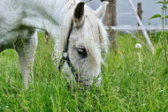 Spring Grass and Magnesium Deficiency in Horses
