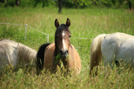 Your Horse's Pasture and Mineral Imbalances: Part One