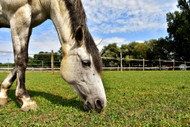 Your Horse's Pasture and Mineral Imbalances: Part Two