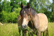 Your Horse's Pasture and Mineral Imbalances: Part Three