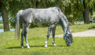 ​Your Horse's Pasture and Mineral Imbalances: Part Four
