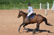​Spring Horse Health: Magnesium and Calming Effect